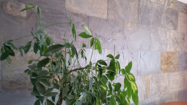 łupek california gold na ścianie